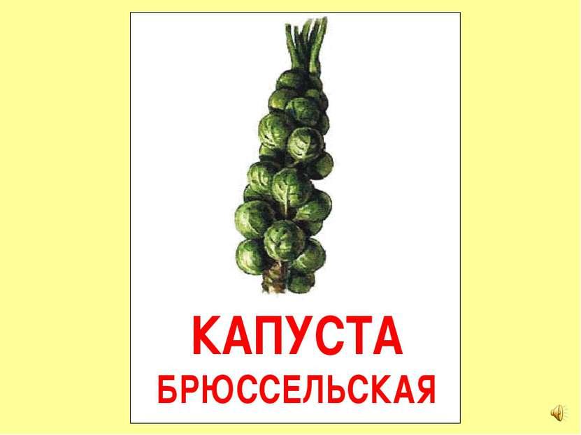 КАПУСТА БРЮССЕЛЬСКАЯ