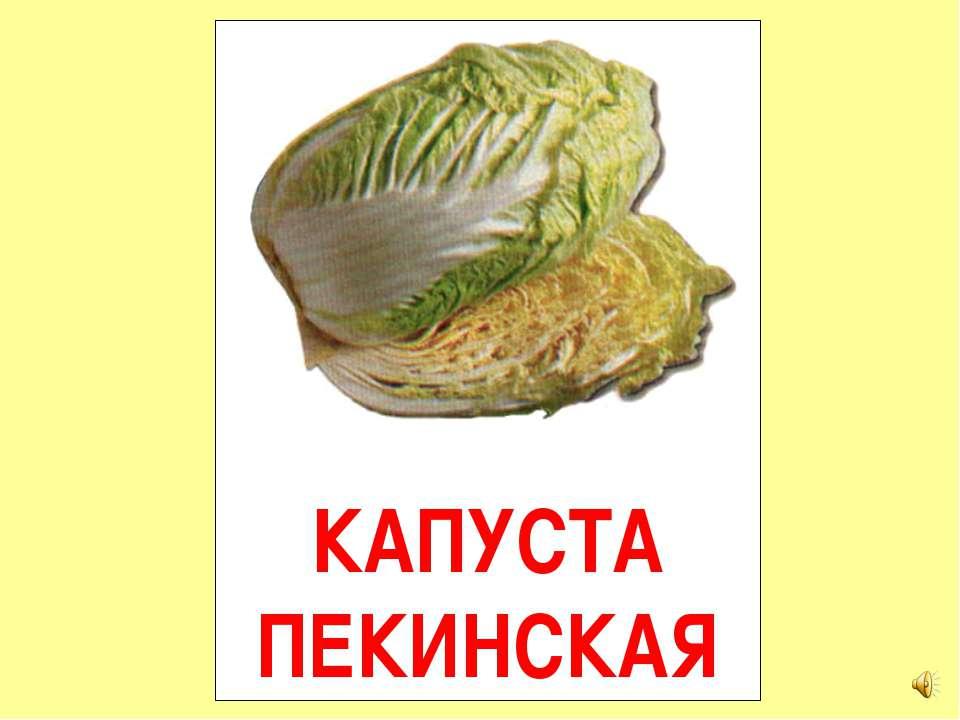КАПУСТА ПЕКИНСКАЯ