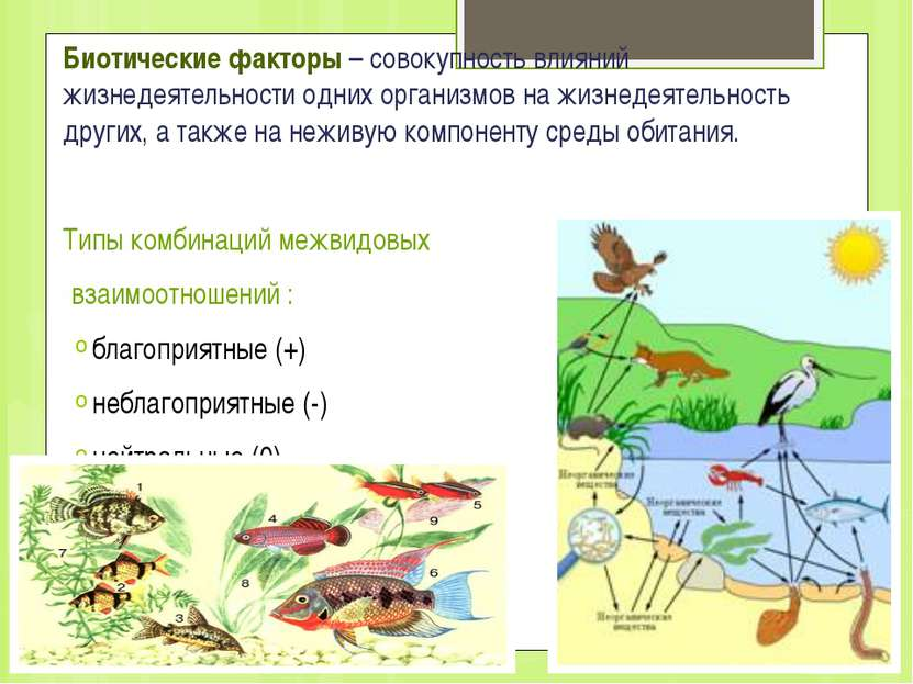 Биотические факторы – совокупность влияний жизнедеятельности одних организмов...