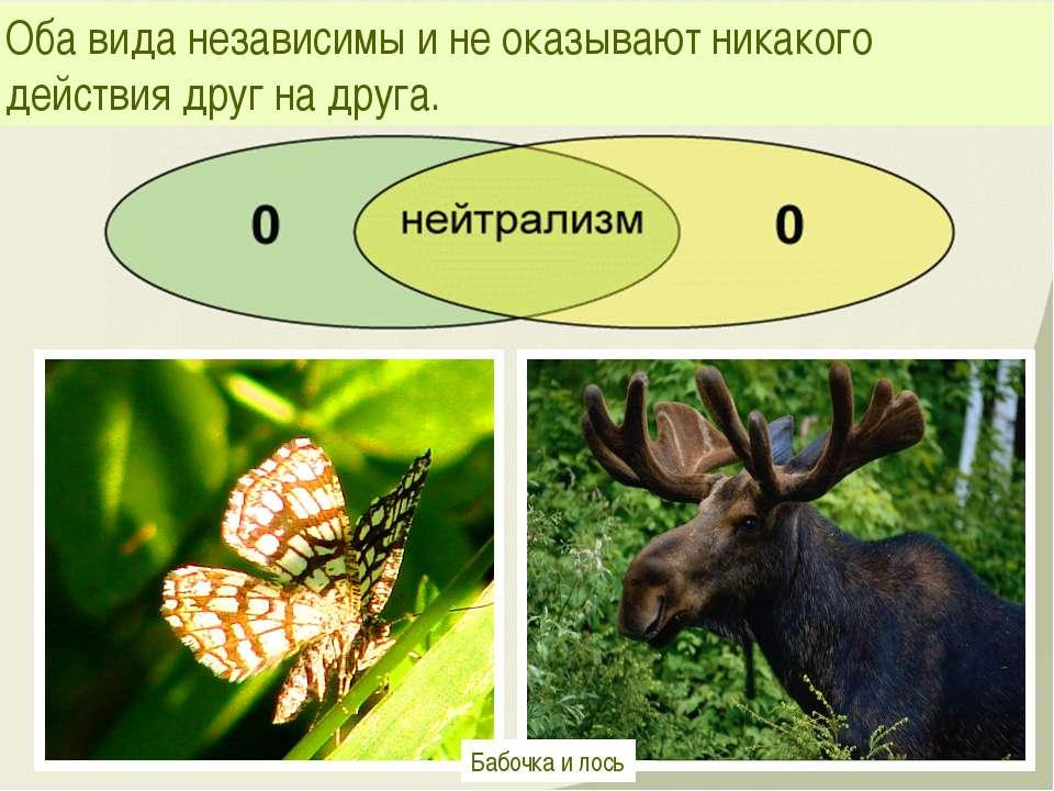 Оба вида независимы и не оказывают никакого действия друг на друга. Бабочка и...
