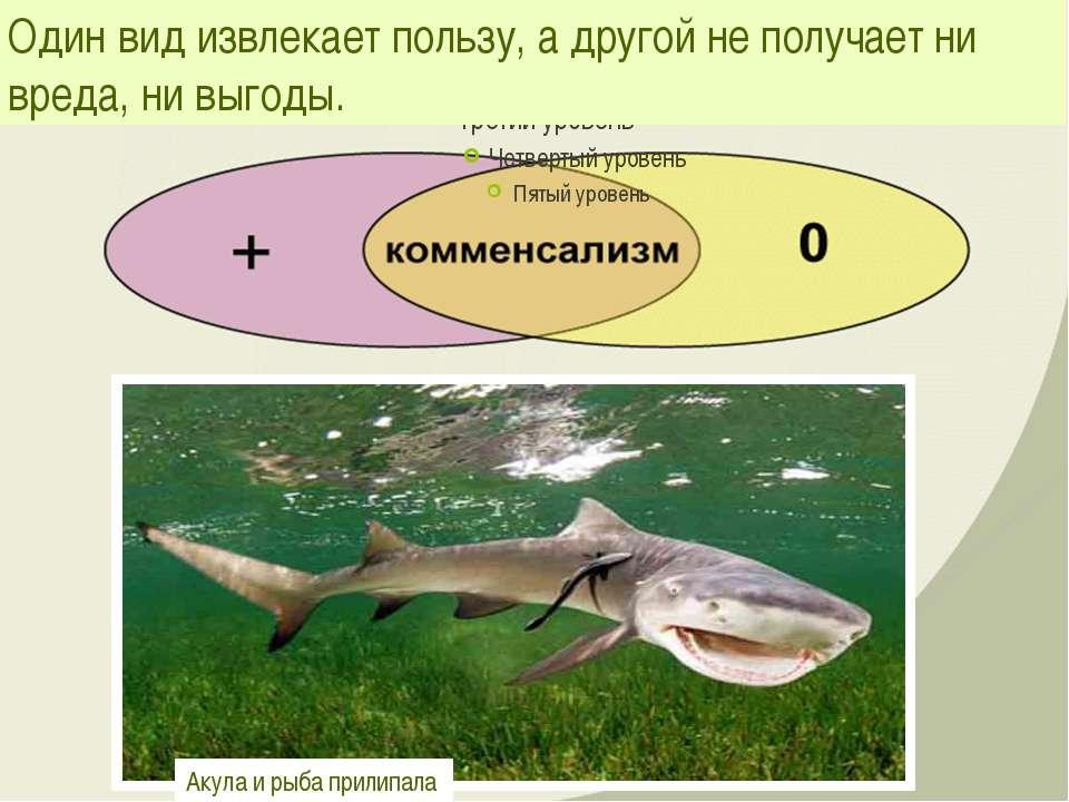 Один вид извлекает пользу, а другой не получает ни вреда, ни выгоды. Акула и ...