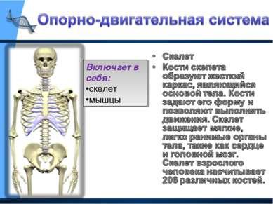 Включает в себя: скелет мышцы