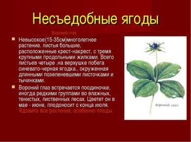 Несъедобные ягоды Вороний глаз Невысокое(15-35см)многолетнее растение. листь...