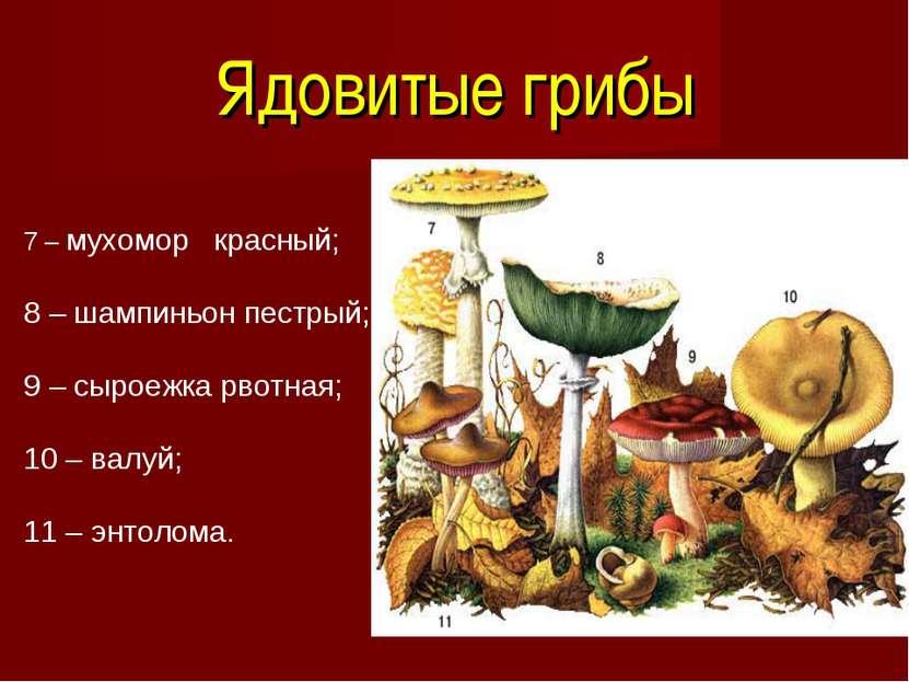 Ядовитые грибы 7 – мухомор красный; 8 – шампиньон пестрый; 9 – сыроежка рвотн...