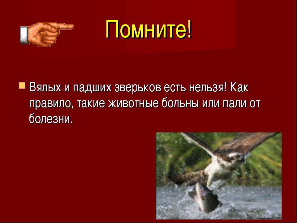 Помните! Вялых и падших зверьков есть нельзя! Как правило, такие животные бол...