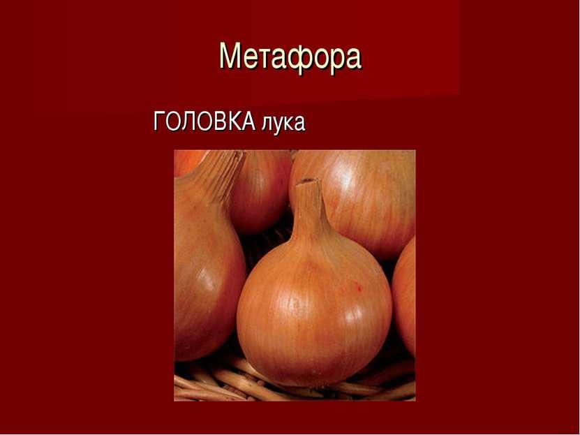 Метафора ГОЛОВКА лука