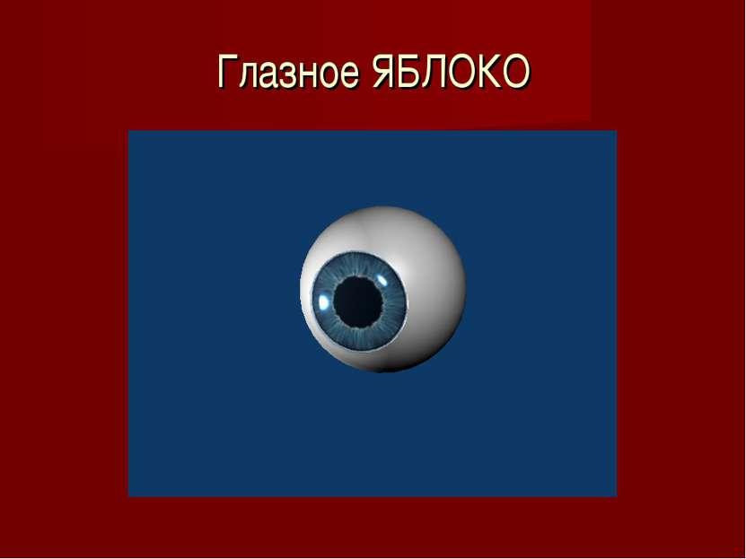 Глазное ЯБЛОКО