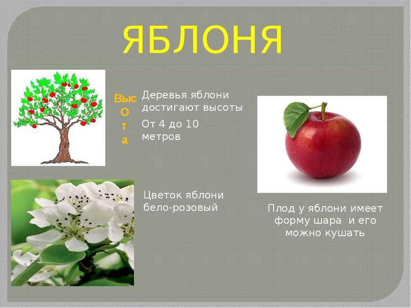 ЯБЛОНЯ Выс О т а От 4 до 10 метров Деревья яблони достигают высоты Цветок ябл...