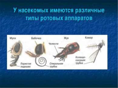 У насекомых имеются различные типы ротовых аппаратов