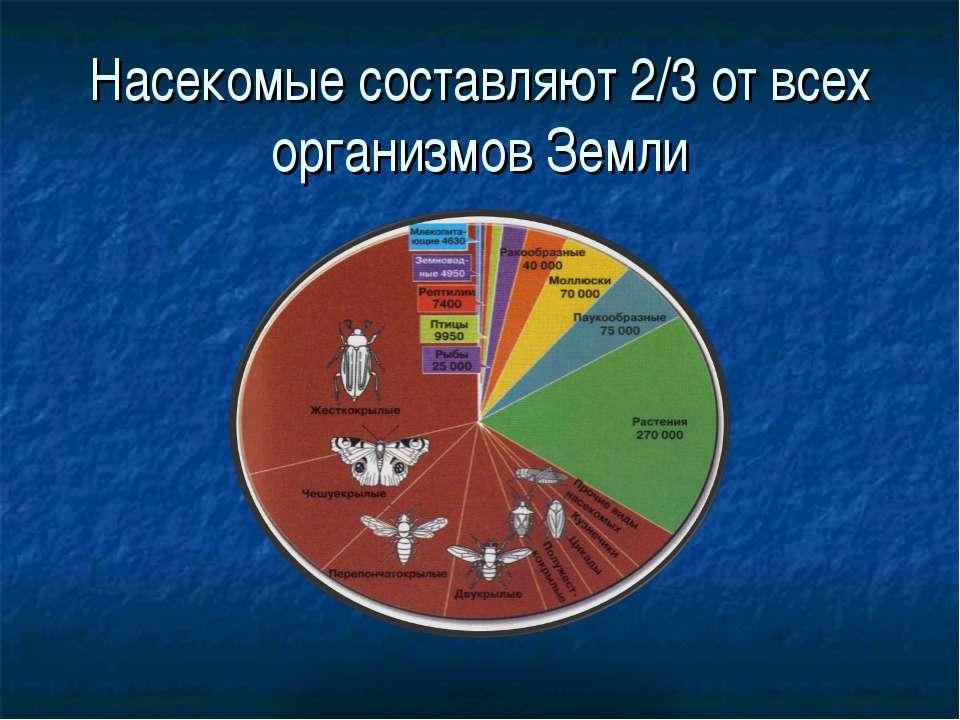 Насекомые составляют 2/3 от всех организмов Земли