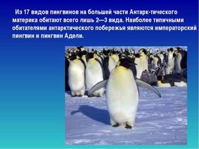 Из 17 видов пингвинов на большей части Антарк-тического материка обитают всег...