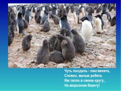 Чуть поодаль - пингвинята, Словно, малые ребята. Им тепло в своем кругу, На...