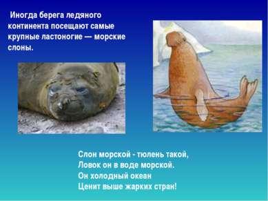 Слон морской - тюлень такой, Ловок он в воде морской. Он холодный океан Це...