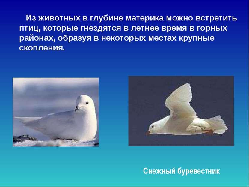 Из животных в глубине материка можно встретить птиц, которые гнездятся в летн...