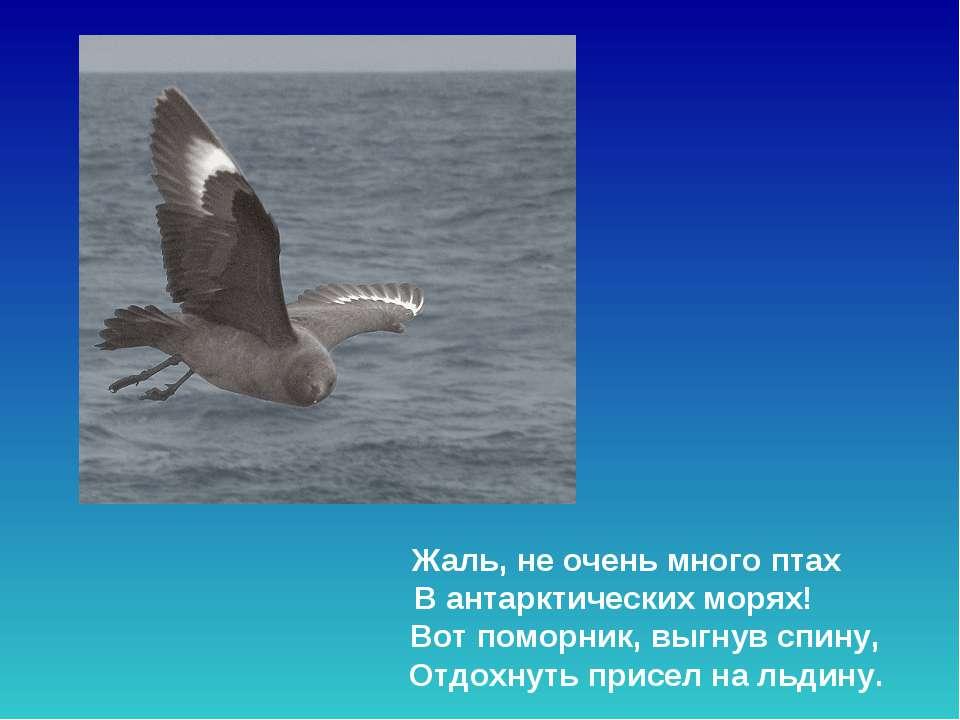 Жаль, не очень много птах В антарктических морях! Вот поморник, выгнув спину...