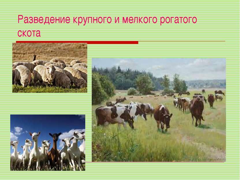 Разведение крупного и мелкого рогатого скота