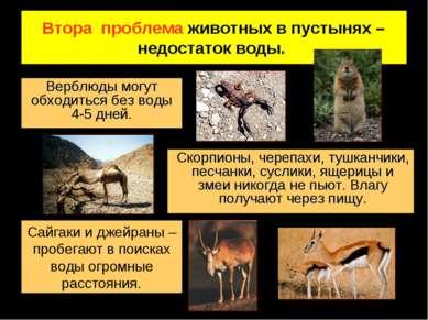 Втора проблема животных в пустынях – недостаток воды. Верблюды могут обходить...