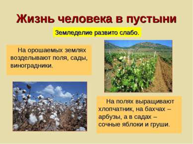 Жизнь человека в пустыни На орошаемых землях возделывают поля, сады, виноград...