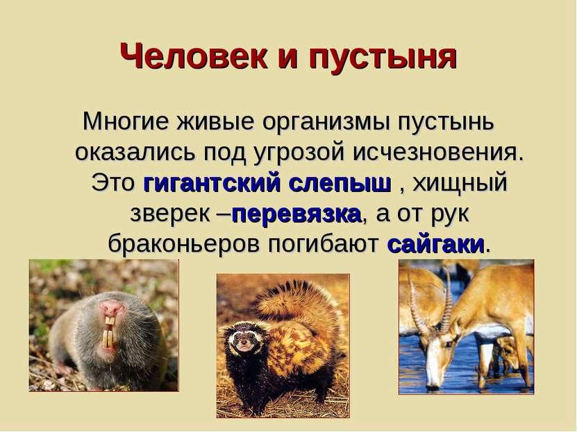 Человек и пустыня Многие живые организмы пустынь оказались под угрозой исчезн...