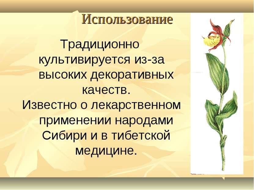 Использование Традиционно культивируется из-за высоких декоративных качеств. ...