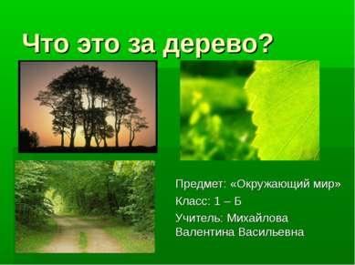 Что это за дерево? Предмет: «Окружающий мир» Класс: 1 – Б Учитель: Михайлова ...