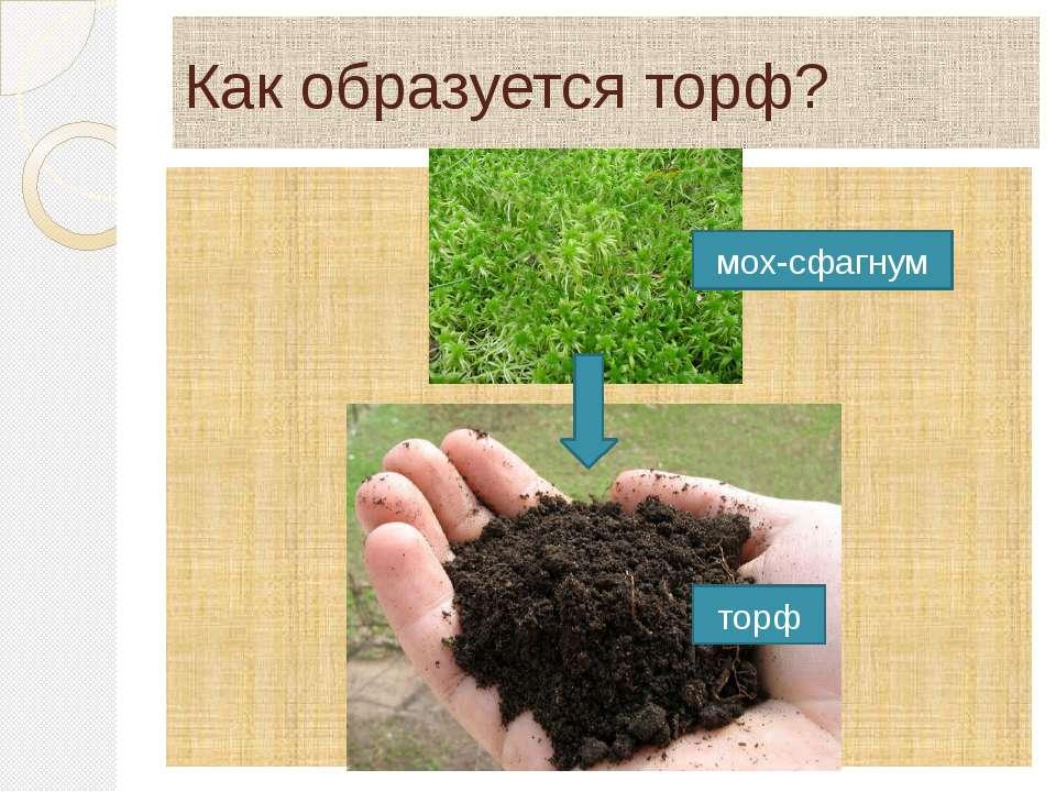 Как образуется торф? мох-сфагнум торф