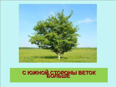 С ЮЖНОЙ СТОРОНЫ ВЕТОК БОЛЬШЕ