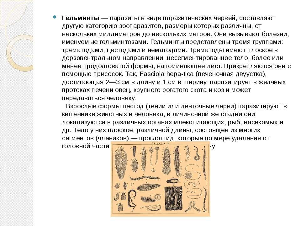 Гельминты — паразиты в виде паразитических червей, составляют другую категори...
