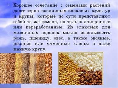 Хорошее сочетание с семенами растений дают зерна различных злаковых культур и...