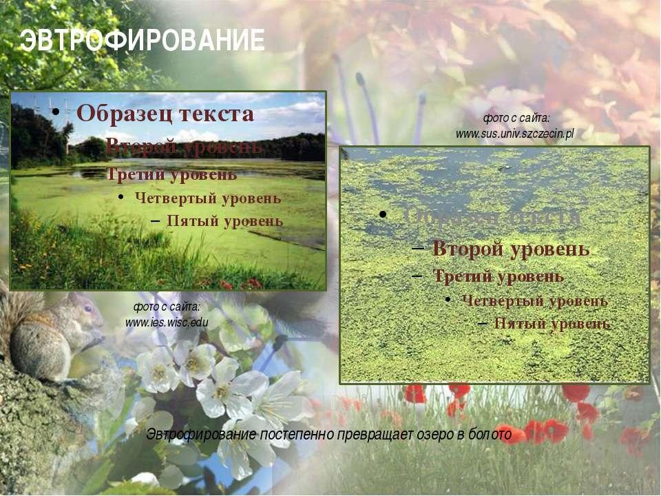 ЭВТРОФИРОВАНИЕ фото с сайта: www.ies.wisc.edu фото с сайта: www.sus.uni...