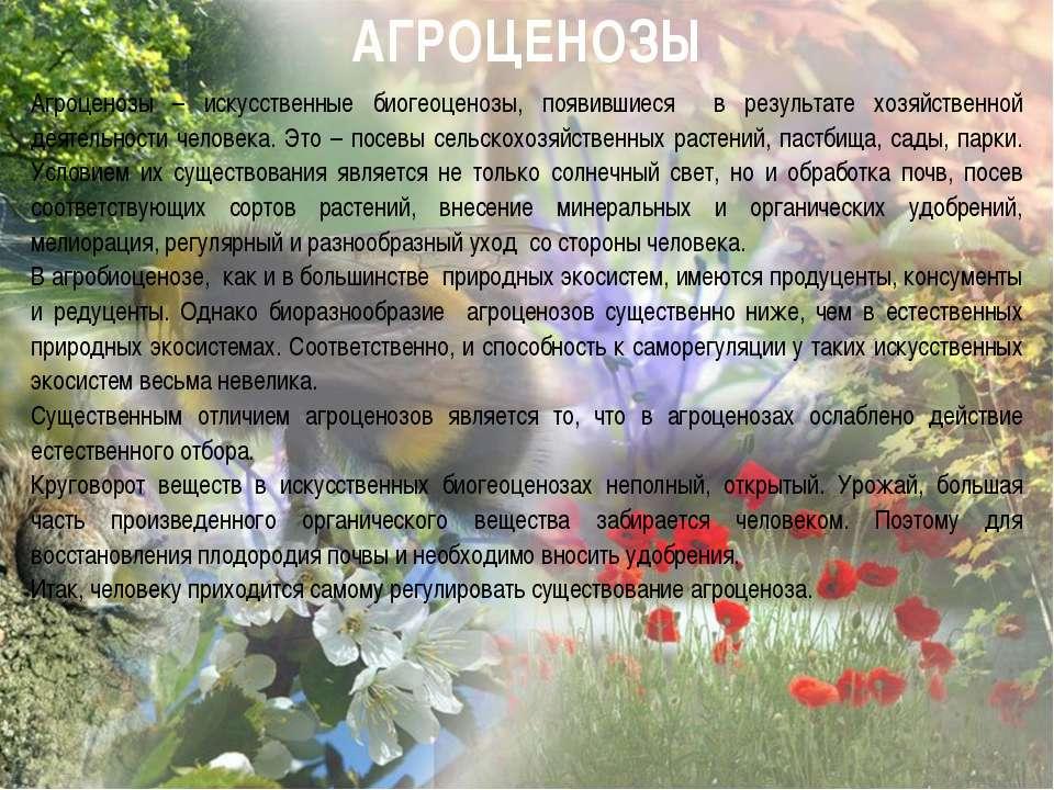 АГРОЦЕНОЗЫ Агроценозы – искусственные биогеоценозы, появившиеся в результате ...