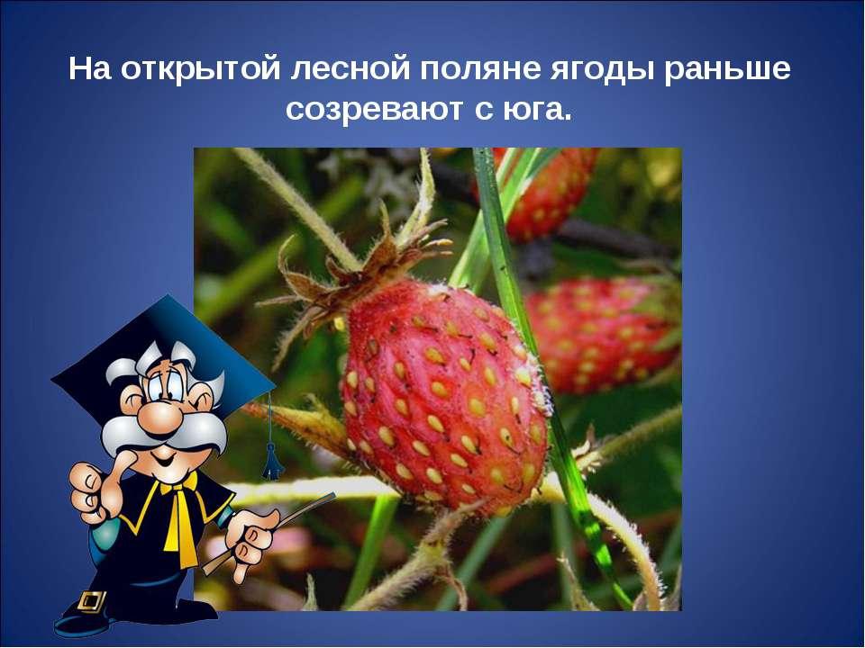 На открытой лесной поляне ягоды раньше созревают с юга.