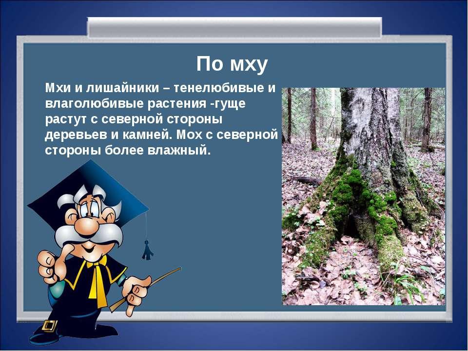 По мху Мхи и лишайники – тенелюбивые и влаголюбивые растения -гуще растут с с...