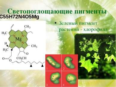 Светопоглощающие пигменты Зеленый пигмент растений - хлорофилл C55H72N4O5Mg