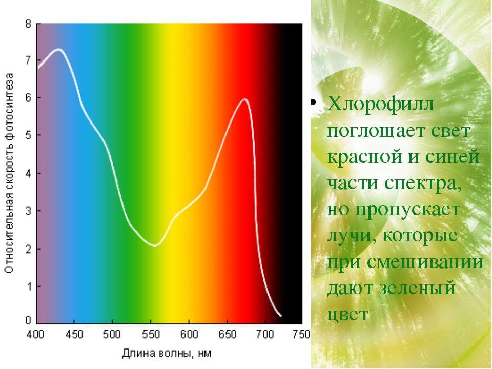 Хлорофилл поглощает свет красной и синей части спектра, но пропускает лучи, к...