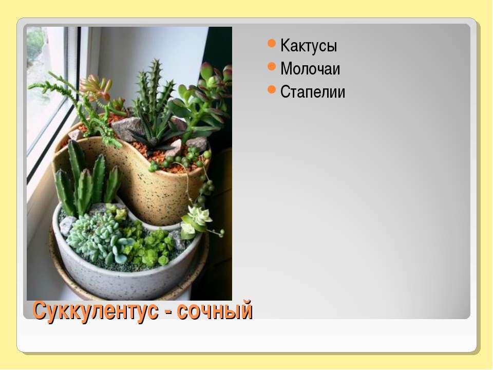 Суккулентус - сочный Кактусы Молочаи Стапелии