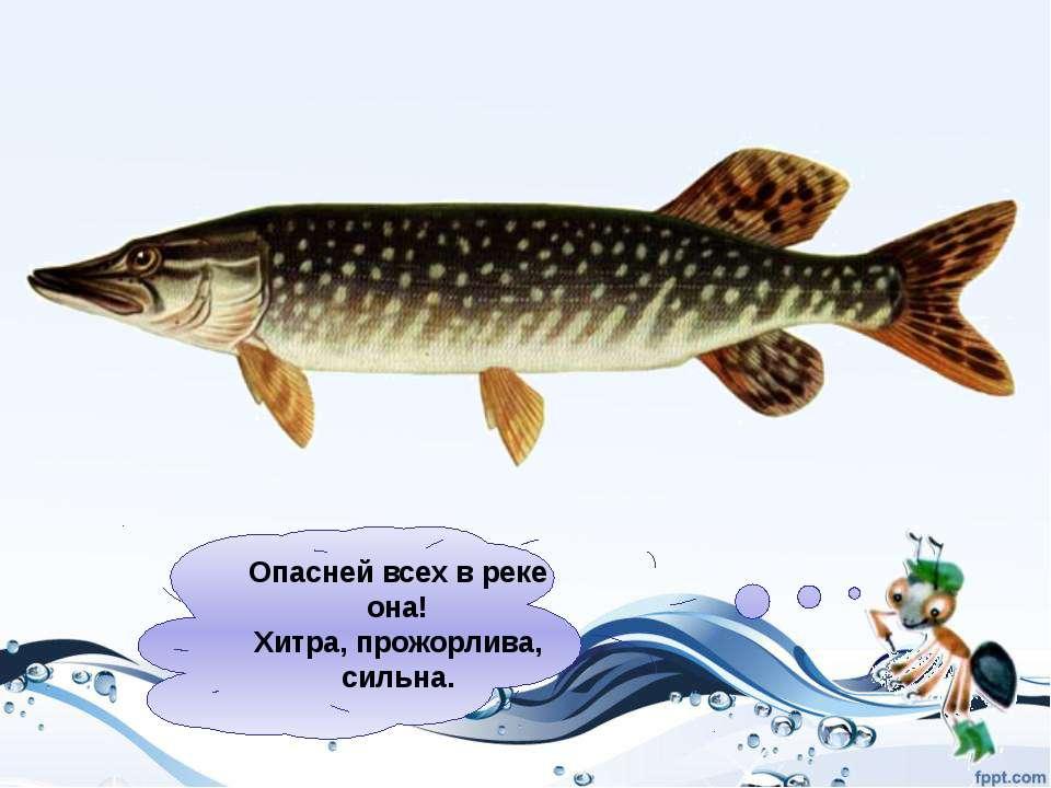 http://riba4ok.ru/index/vidy_i_opisanie_ryb/0-7 http://images.yandex.ru/ Испо...