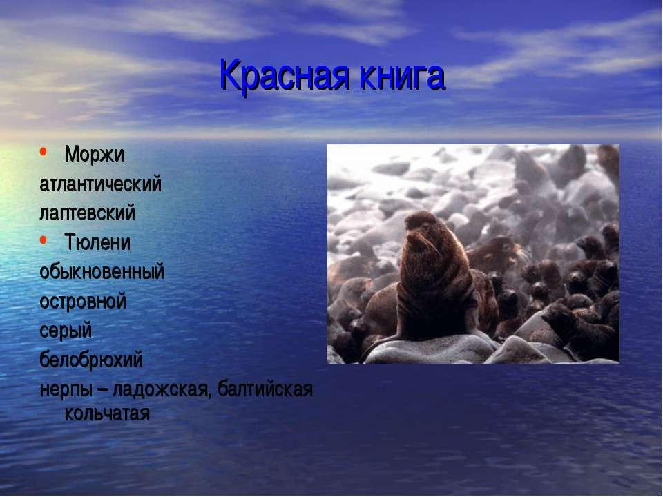 Красная книга Моржи атлантический лаптевский Тюлени обыкновенный островной се...