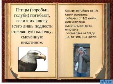 Птицы (воробьи, голуби) погибают, если к их клюву всего лишь поднести стеклян...
