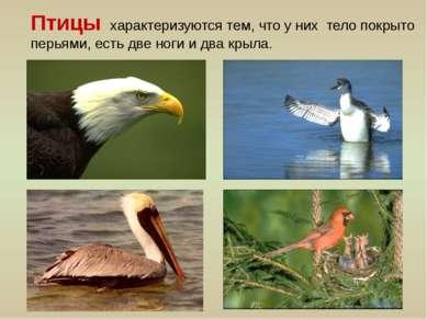 Птицы характеризуются тем, что у них тело покрыто перьями, есть две ноги и дв...