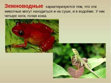 Земноводные характеризуются тем, что эти животные могут находиться и на суше,...