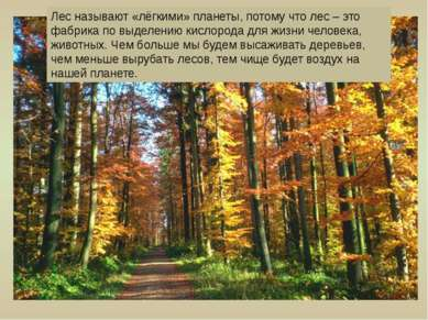 Лес называют «лёгкими» планеты, потому что лес – это фабрика по выделению кис...