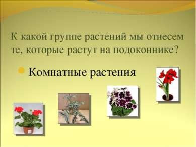 К какой группе растений мы отнесем те, которые растут на подоконнике? Комнатн...