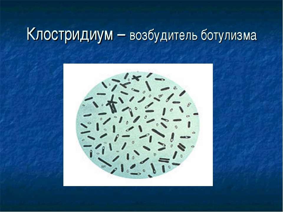 Клостридиум – возбудитель ботулизма