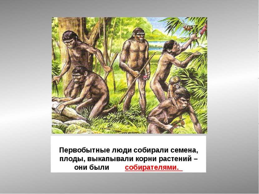 Первобытные люди собирали семена, плоды, выкапывали корни растений – они были...