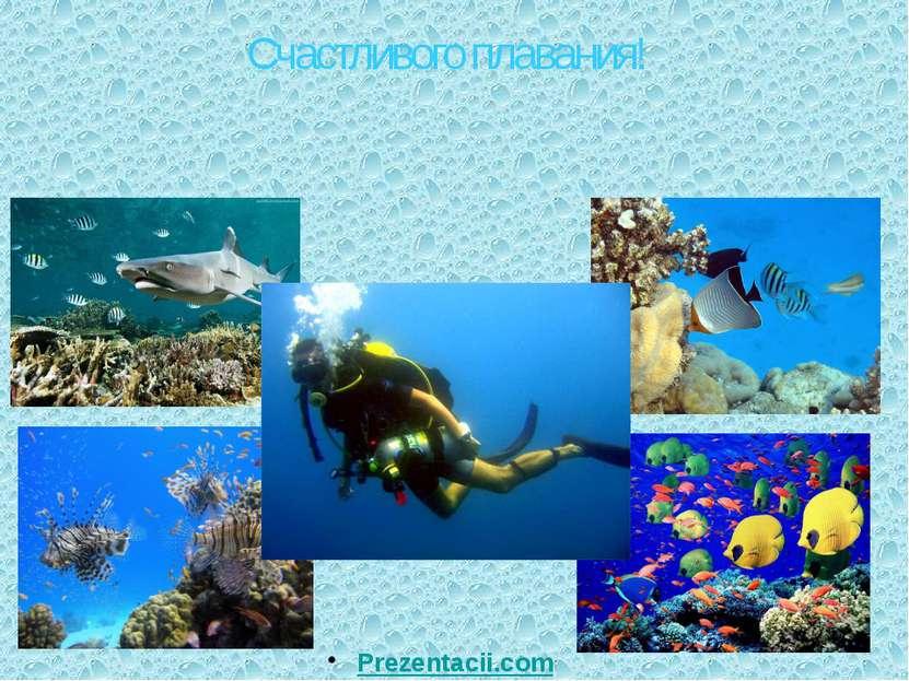 Счастливого плавания! Prezentacii.com