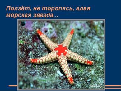 Ползёт, не торопясь, алая морская звезда...