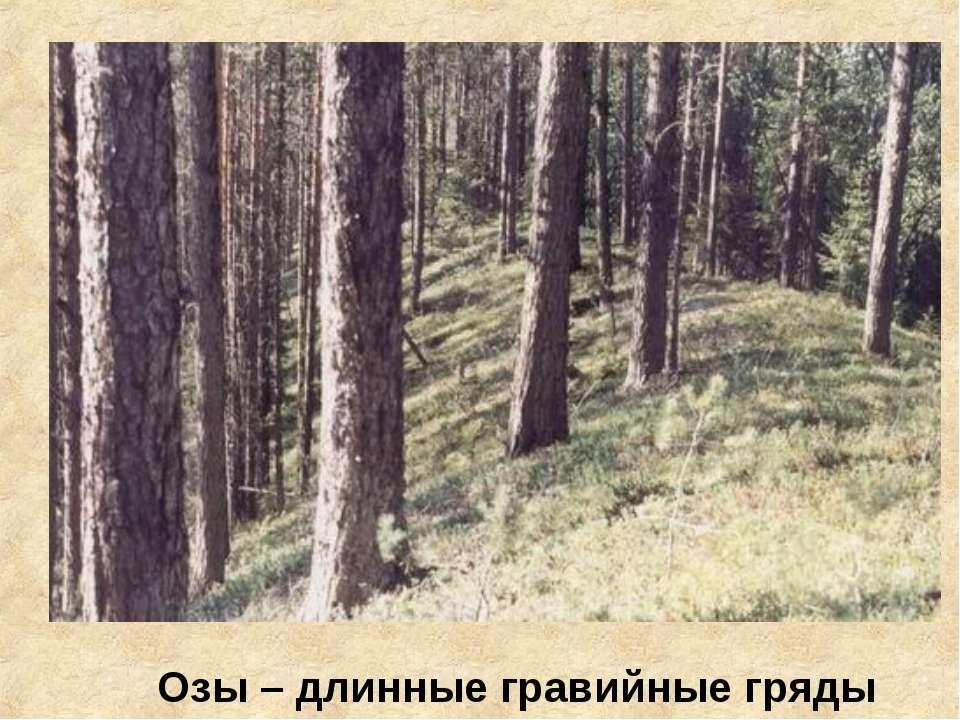 Озы – длинные гравийные гряды