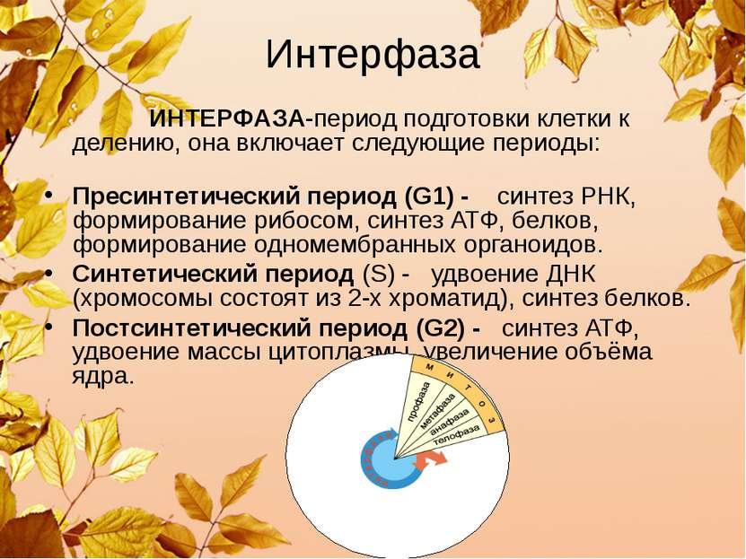 Интерфаза ИНТЕРФАЗА-период подготовки клетки к делению, она включает следующи...