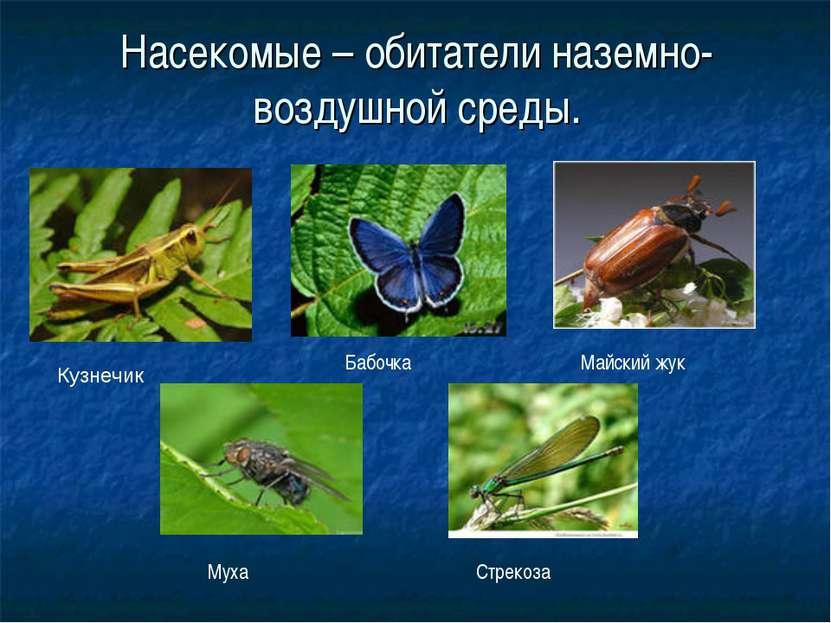 Насекомые – обитатели наземно-воздушной среды. Кузнечик Стрекоза Майский жук ...